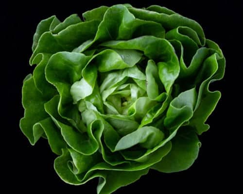 Adapting HCG to the vegetarian diet